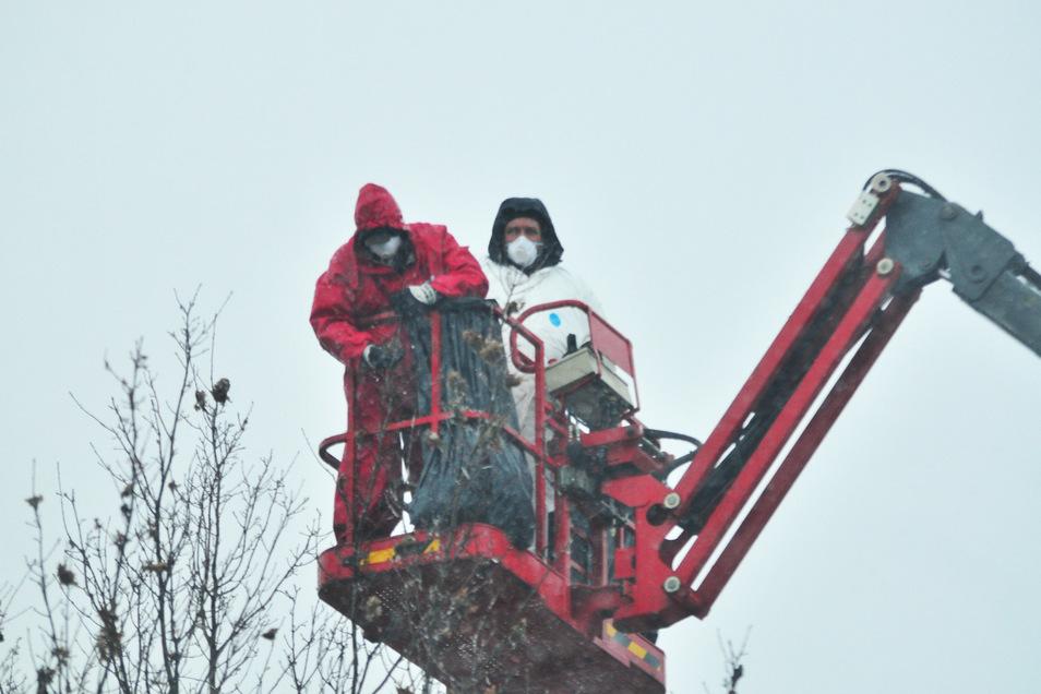 Hans Nunnemann und sein Kollege von der Rentokil Initial schneiden auch bei Schnee und Regen die Ast-Enden der Bäume. In Schutzanzügen entfernen sie per Hand alle Ungeziefernester am Radweg parallel zu Kronospan.