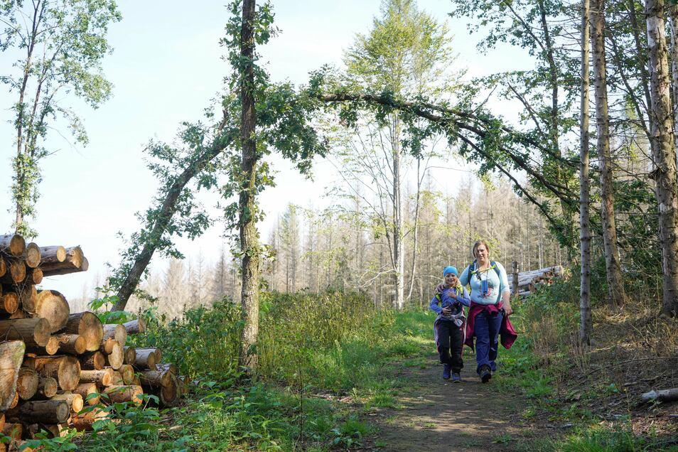 Dürre und der Borkenkäfer haben auch den Wäldern rund um Wilthen zugesetzt. Es wird entsprechende Wanderkleidung mit passendem Schuhwerk empfohlen.