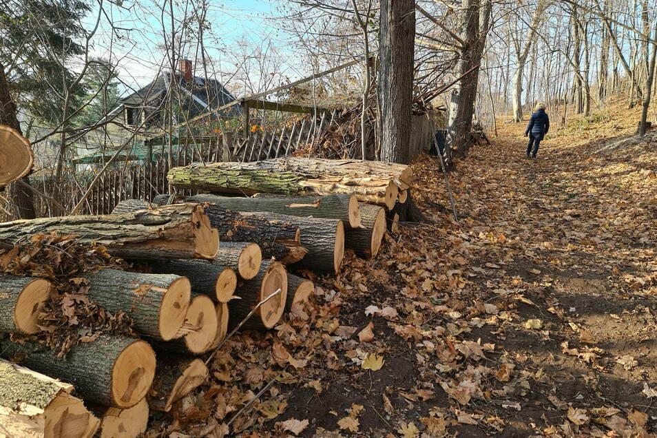 Gerade wurden abgestorbene Bäume gefällt. Lange Zeit hat hier niemand aufgeräumt.