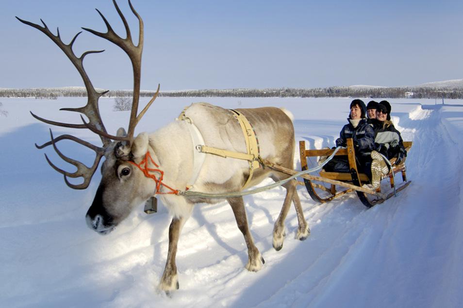 Eine Fahrt mit dem Rentier-Schlitten gehört zum Lappland-Urlaub selbstverständlich dazu.