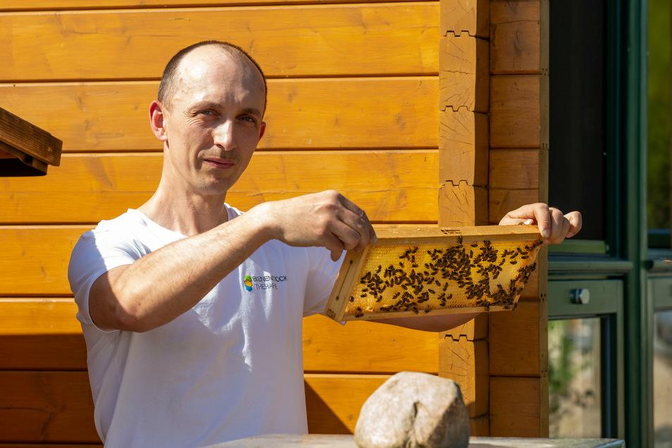 Hobbyimker Dirk Jäger zeigt eine Honigwabe. Nach dem kalten Frühling können die Bienen nun endlich Honig sammeln.