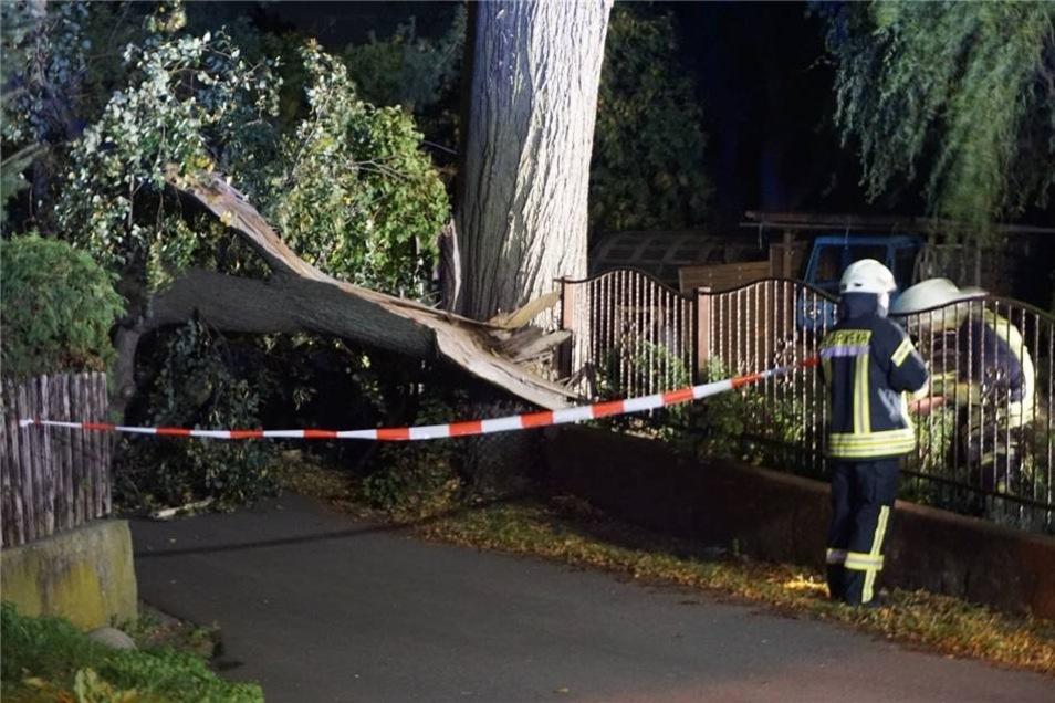 Die Standsicherheit des Baumes war nicht mehr gewährleistet. Er wurde schließlich abgetragen.