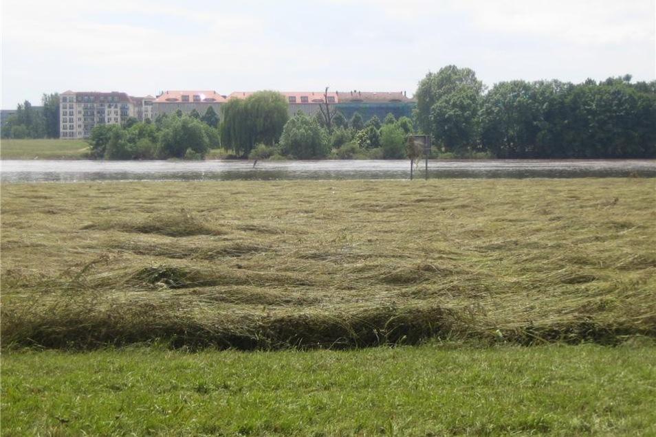 """Von den Wassermassen """"gestriegeltes"""" Gras auf den noch nassen Uferwiesen."""
