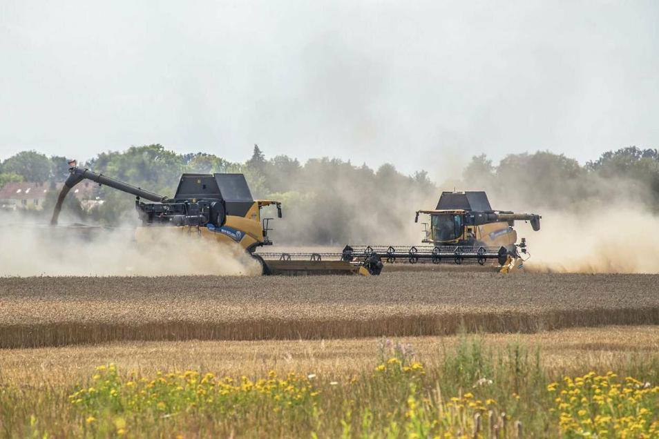 Die Getreideernte zwischen Rothenburg und Nieder Seifersdorf läuft derzeit auf Hochtouren. Die Erträge versprechen besser zu werden als noch vor einem Jahr – auch, weil es zwar wieder ein trockenes, aber durchaus kein echtes Dürrejahr war.