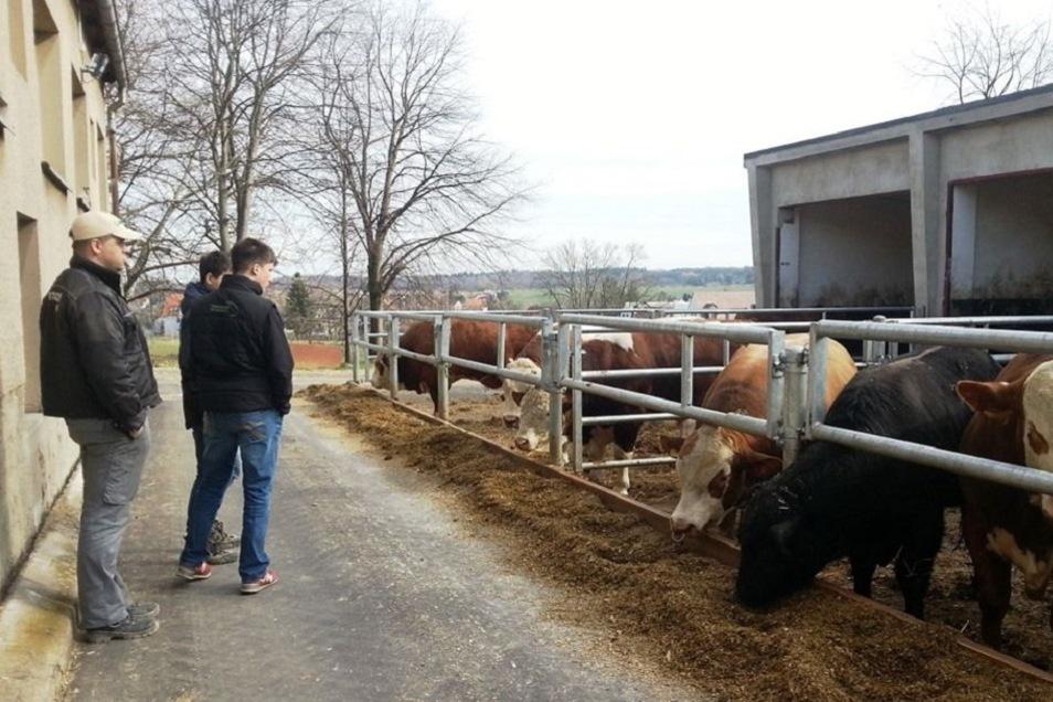 ...oder in der Landwirtschaft: für die Jugendlichen öffnet sich der Blick direkt für den Beruf mit all seinen Facetten.