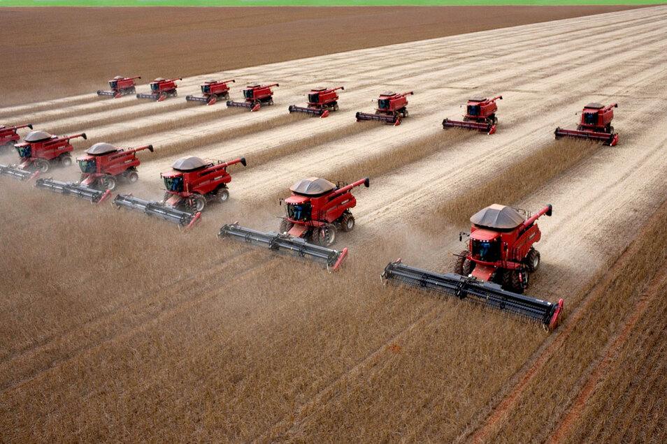 Erntemaschinen fahren über ein Sojafeld.