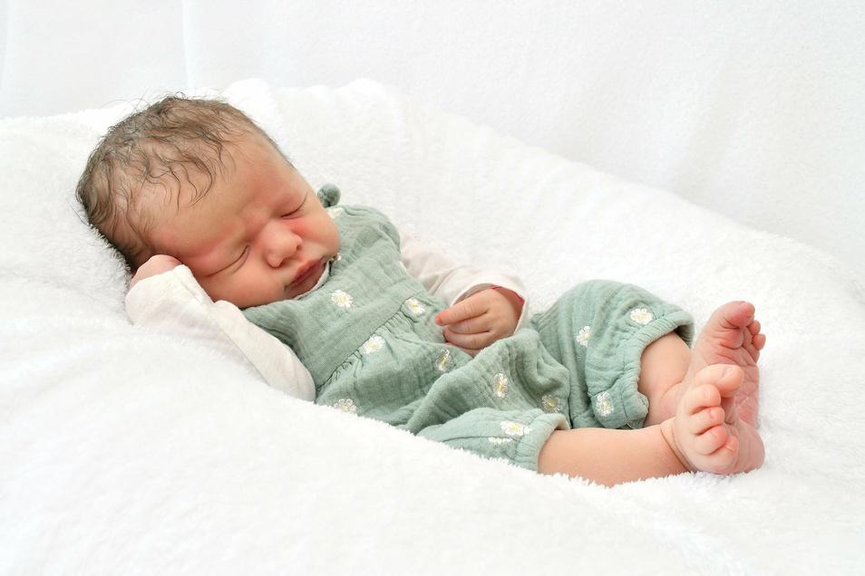 Lotta, geboren am 2. Juli, Geburtsort: Pirna, Gewicht: 3.910 Gramm, Größe: 53 Zentimeter, Eltern: Franziska und Peter mit Meo, Wohnort: Pirna