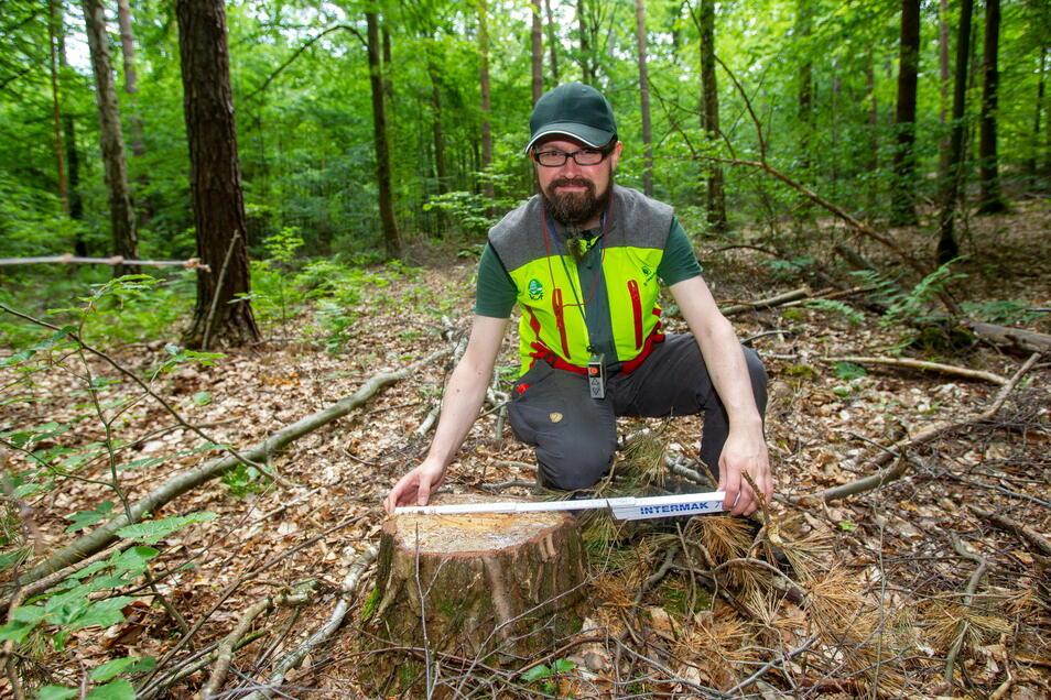 Auch totes Holz ist gutes Holz. Es bindet Kohlendioxid und wertet das Ökosystem auf: Tommy Schulze vermisst den Stubben einer Kiefer.