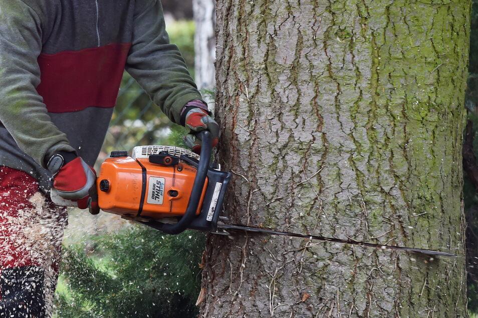 Wer einen Baum auf einem privaten und bebauten Grundstück fällen will, muss das bei der Stadt oder der Gemeinde beantragen.