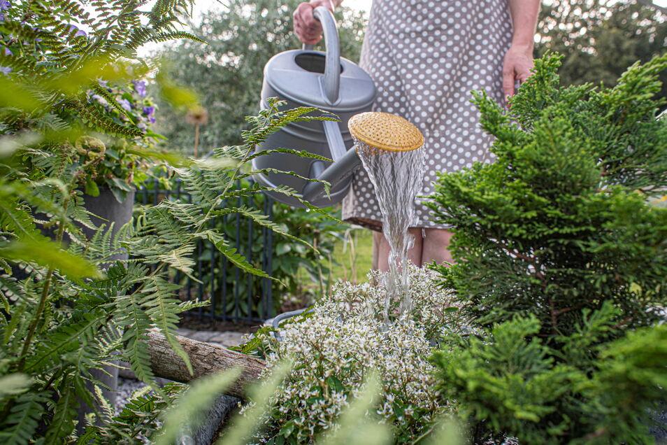 Natürlich nimmt in so einem großen Garten das Gießen eine große Rolle ein. Ganz klassisch mit Gießkanne geht es hier auch noch zur Sache.