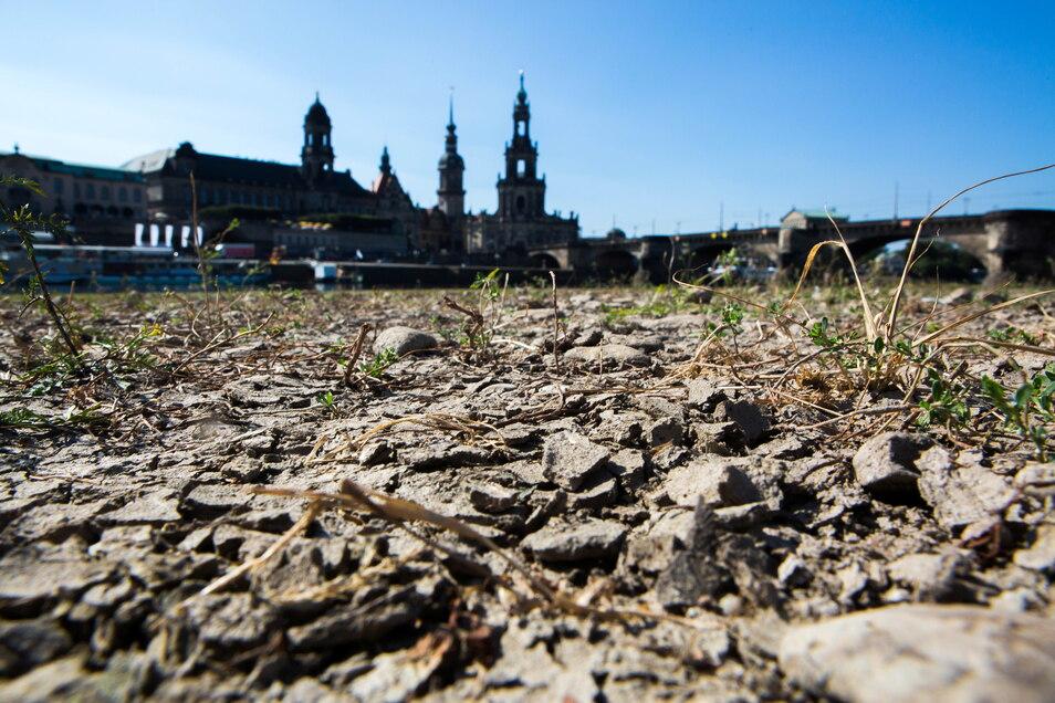 Dresden hat nun schon mehrere Dürresommer hinter sich. Kann der neue Klima-Check die Folgen reduzieren?