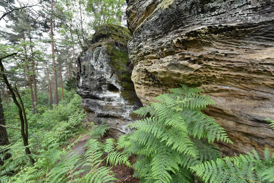 Die Sandsteinfelsen an der Erashöhe bei Seifersdorf machen diese zu einer Besonderheit der Natur und einem interessanten Wanderziel.