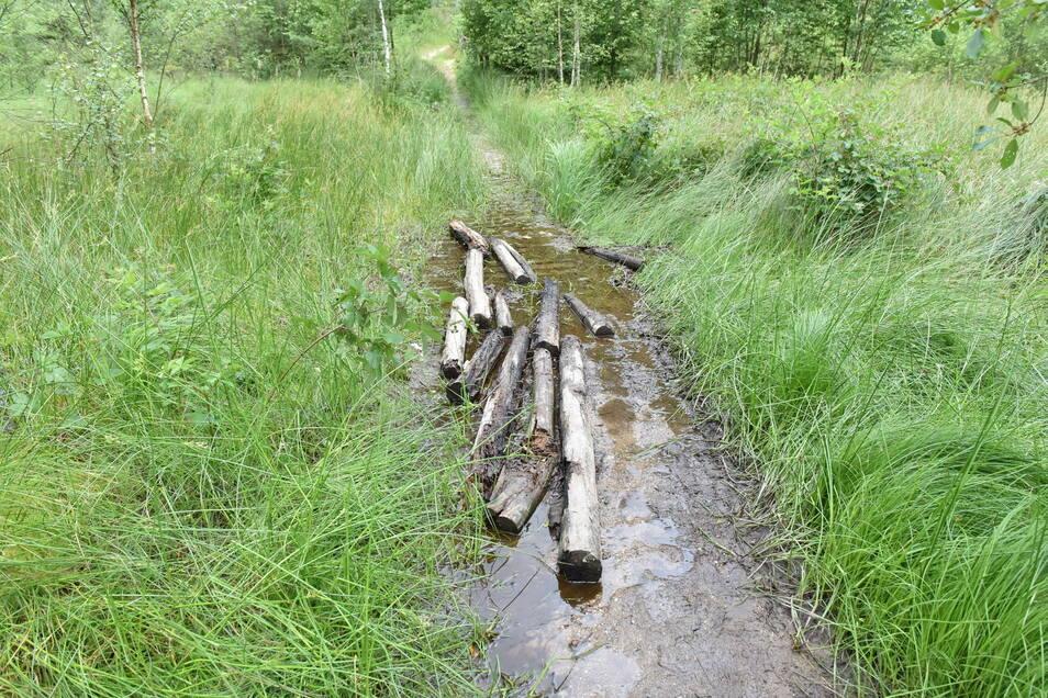 Wanderer haben am Diebsgrundteich alte Holzbohlen auf den Steg gelegt und die Passage gefährlich gemacht.