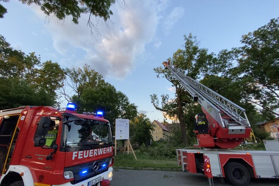15 Feuerwehrleute waren am Dienstagabend in Pochra im Einsatz. Ein umstürzender Baum hatte gleich mehrere Folgeschäden verursacht.