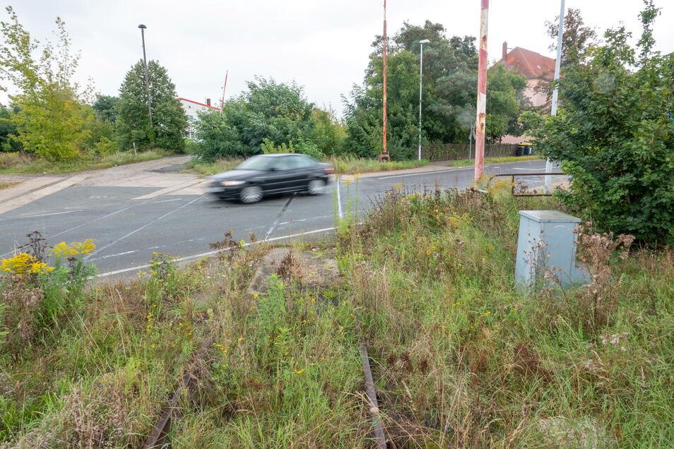 Der Bahnübergang Lommatzscher Straße: Nicht nur dort, sondern an vielen weiteren Streckenteilen der Bahnstrecke Riesa-Nossen dominiert der Bewuchs das Bild.