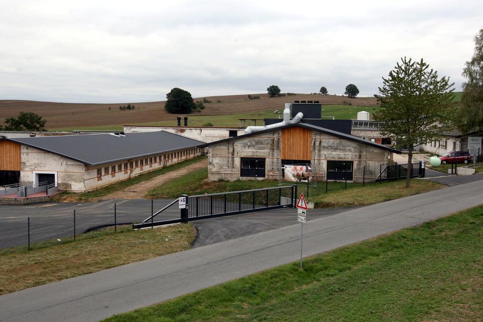 In der ehemaligen Schweinemastanlage in Langenwolmsdorf werden Ferkel gezüchtet.