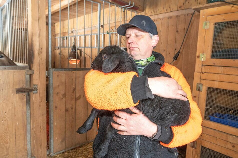Über dieses schwarze Schaf freut sich Tierparkleiter Michael Tobis: Das Tier gehört zum Nachwuchs in der städtischen Einrichtung.
