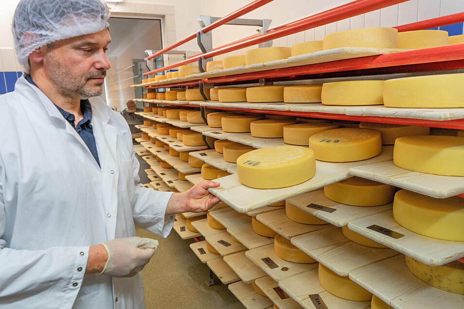 Der Geschäftsführer der Krabat Milchwelt Tobias Kockert kontrolliert den Reifegrad von Käse.