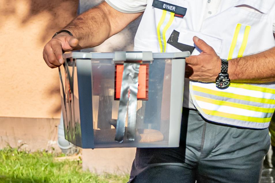 Reptilienexperte Roland Byner trägt die entwischte Monokelkobra in einem Behälter aus einem Hauseingang.