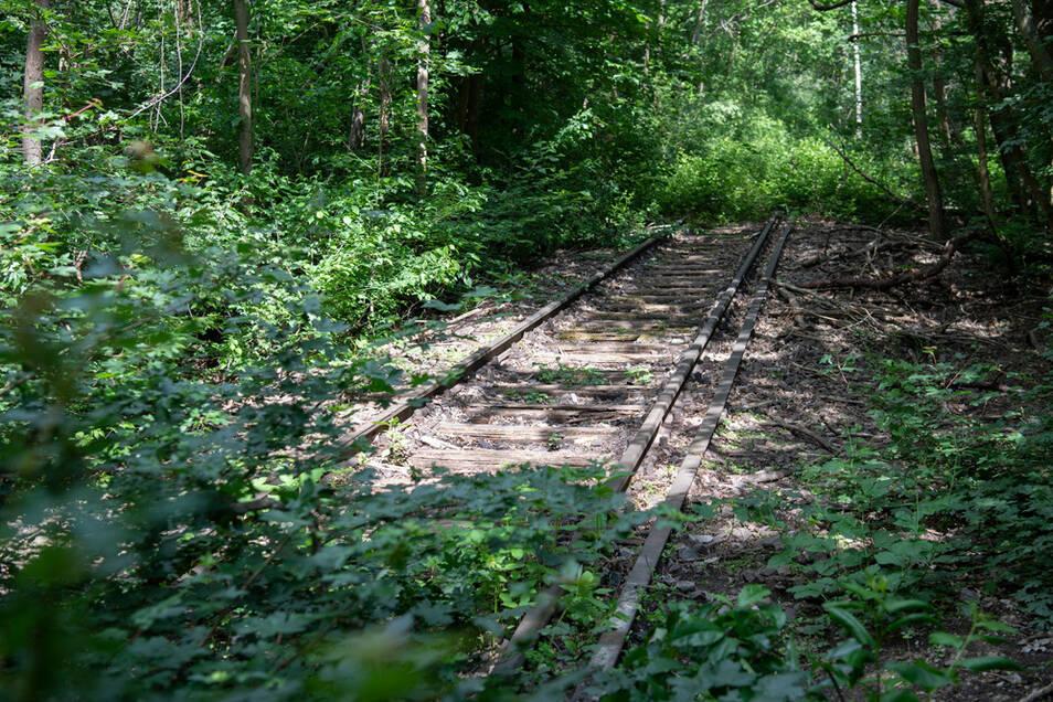 Die Bahn will stillgelegte Strecken reaktivieren - außer in Sachsen.