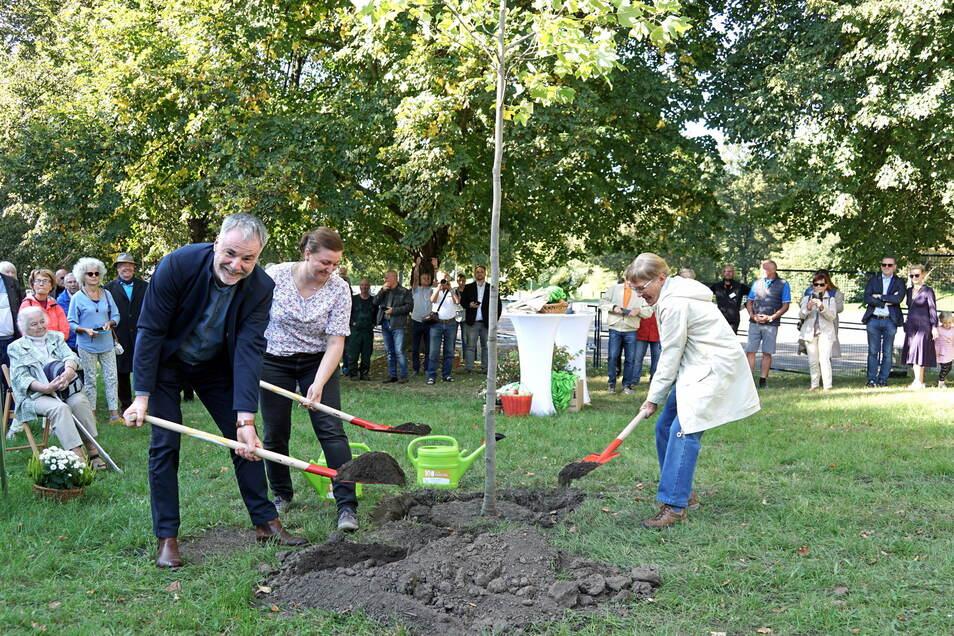 Der 100. ist ein Tulpenbaum und wurde von Oberbürgermeister Uwe Rumberg, Stefanie Wieland vom Grünflächenamt und Susanne Brand vom Umweltzentrum (v.li.) gepflanzt.