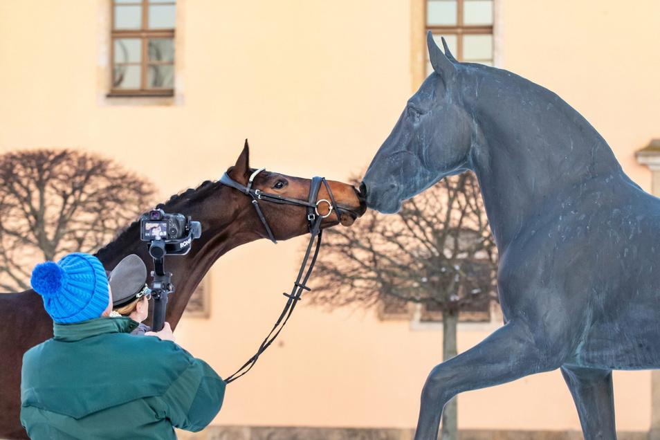 Hallo, wer bist du denn? Neuzugang Il Silenzio M - ein Deutsches Sportpferd - beschnuppert neugierig das Standbild des Moritzburger Hengstes Elton.