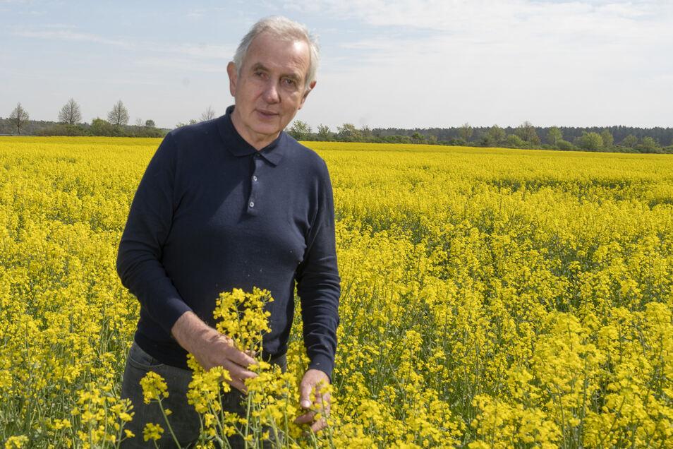 Gerhard Förster prüft den Raps auf einem Feld bei Kreinitz. Die Coronakrise drückt die Preise zusätzlich - ein Problem für die Landwirte.