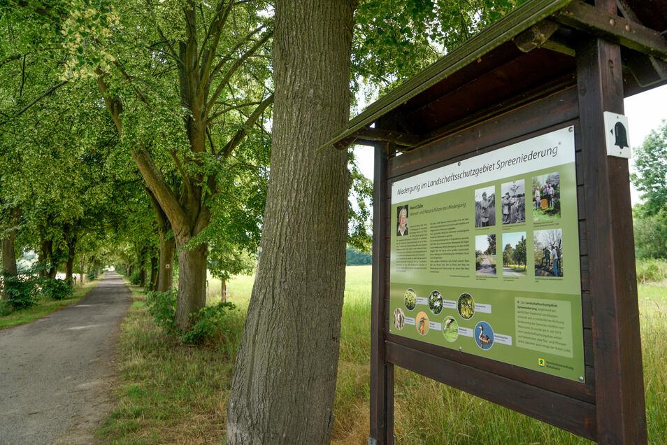Der Heimatverein von Niedergurig sponserte eine Ehrentafel, die an das Schaffen von Horst Zähr erinnert. Die Lindenallee hat Horst Zähr gepflanzt.