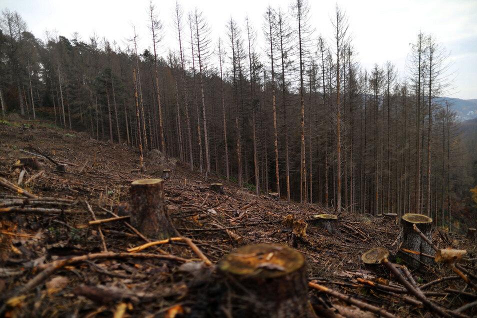 Dürre und die Borkenkäfer haben den Wäldern in den vergangenen Jahren schwer zugesetzt.