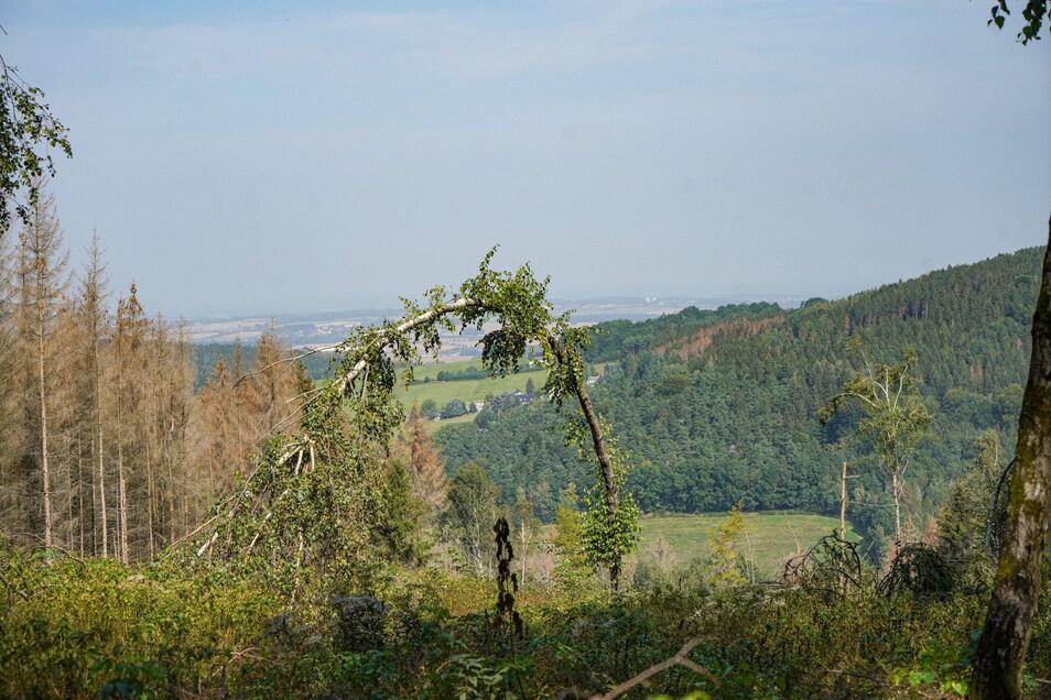Ausgedehnte Wälder und verträumte Hügel laden zu einer Auszeit ein.