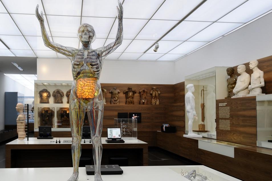 """Das Exponat """"Glaeserne Frau"""" im Deutschen Hygiene-Museum Dresden."""