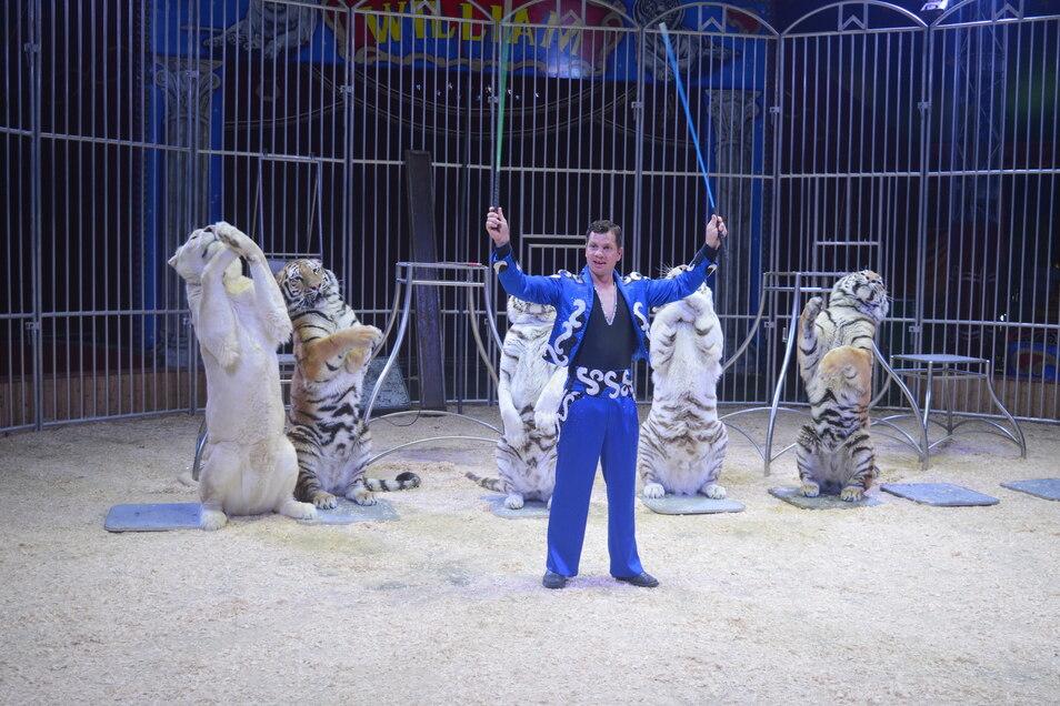 Manuel Wille, führender Raubtierlehrer im Zirkus William, bei seiner Show.