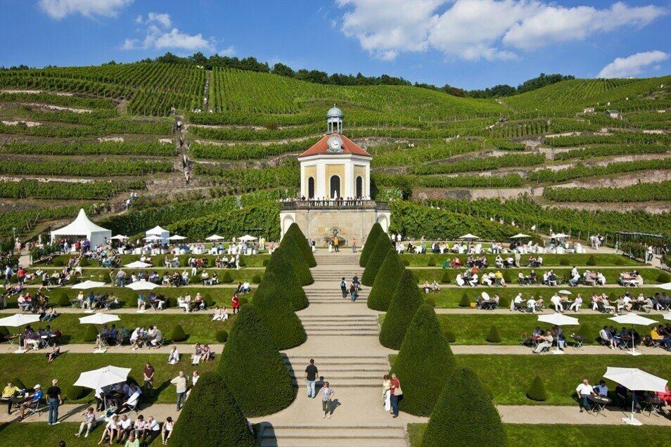 Der Weinsommer auf Europas erstem Erlebnisweingut verspricht Genuss für alle Sinne.