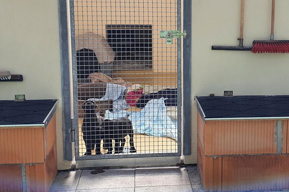 Da waren sie noch zusammen: Biggi und James vor einigen Wochen in ihrem Quarantänezwinger im Freitaler Tierheim.