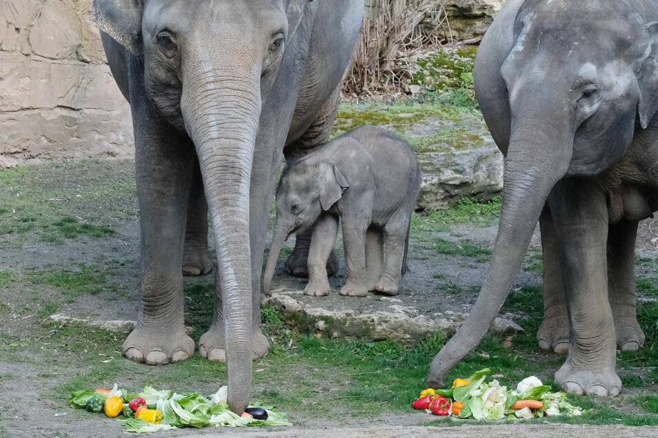Der kleine Kiran mit Mutter Rani und Elefantentante Don Chung.