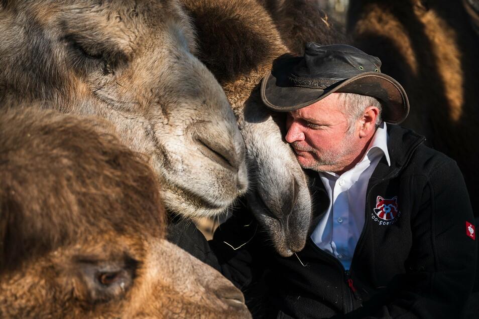 Sorgt sich um die Zukunft der Tiere: Sven Hammer bei den Kamelen.