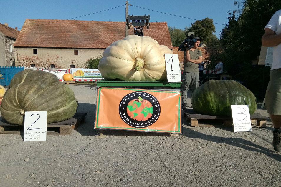 Siegerehrung für die Dicksten: Der Kürbis (Mitte) von Andreas Baumert aus Ober-Neundorf wiegt 439,3 Kilogramm.