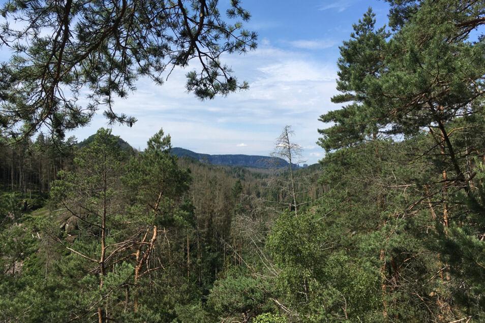 Blick von der Kleinstein-Aussicht
