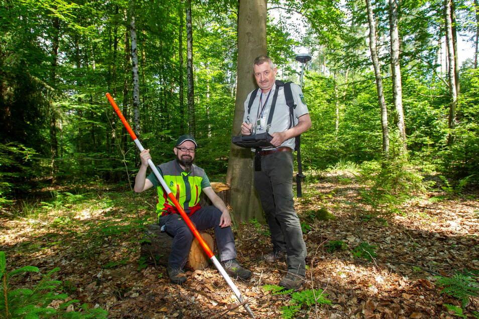 Sie leiten die Bundeswaldinventur in Sachsen: Michael Schmid (r.) und Tommy Schulze vom Staatsbetrieb Sachsenforst an einem Inventurpunkt im Liebethaler Wald.