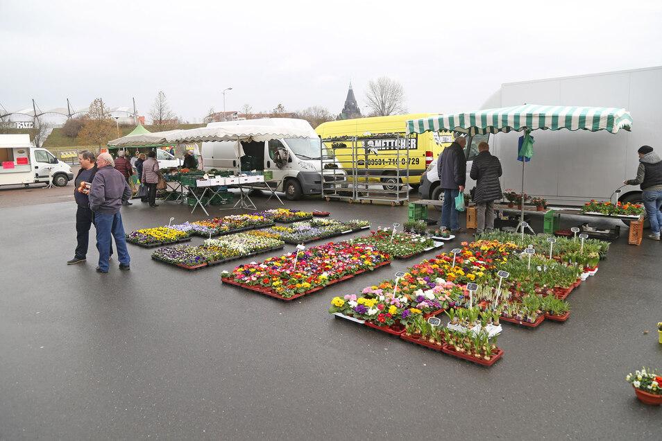 Viele Riesaer wollen den Wochenmarkt vor der Arena nicht mehr missen - sowohl Händler als auch Gäste.