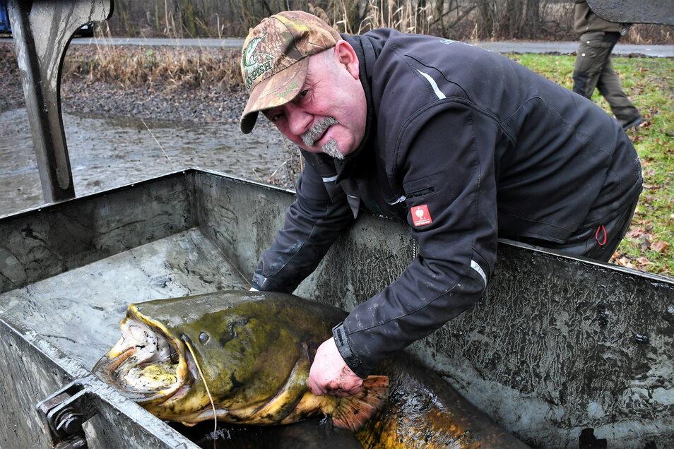 Teichwirt Armin Kittner mit einem Riesenwels beim Abfischen in Petershain