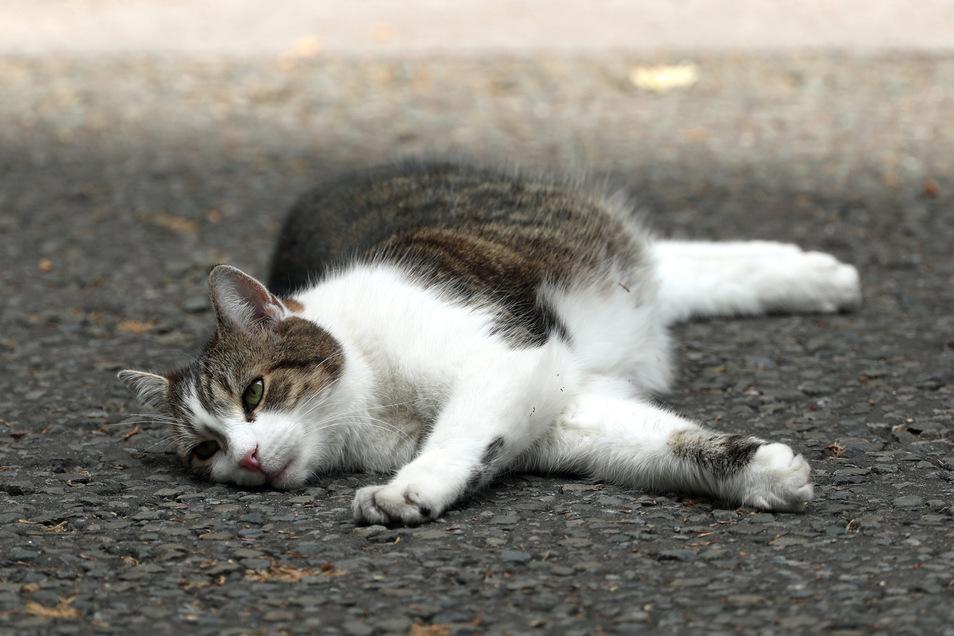 Die gerettete Katze wurde ins Tierheim gebracht.