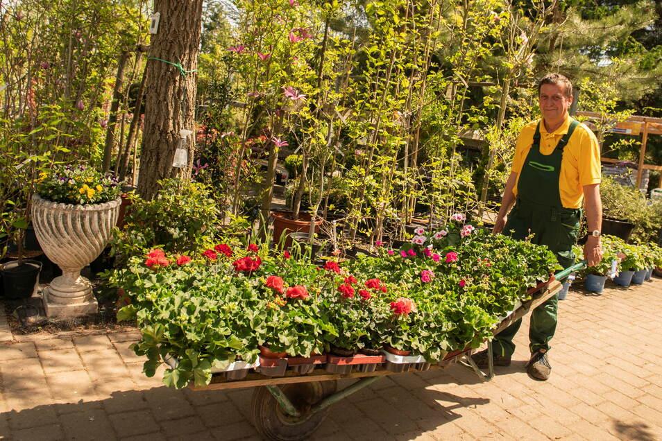 Nun hat es die längste Zeit gedauert: Hans-Jörg Winkler von der gleichnamigen Baumschule in Priestewitz hat am Dienstag Nachschub an Balkonpflanzen von den Züchtern geholt.