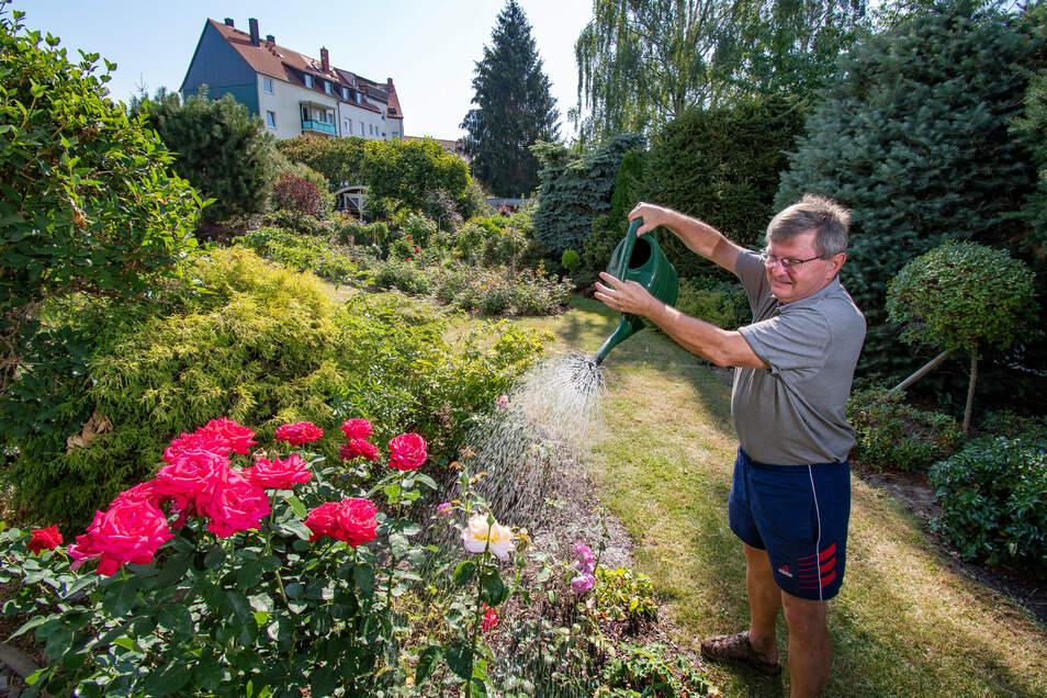 Gießen ist an diesen heißen Tagen obligatorisch. Zerge wässert seinen Garten jeden zweiten oder dritten Abend bis zu zwei Stunden lang. Selbst Pflanzen, die sonst mit der Trockenheit gut zurechtkommen, brauchten in diesem Jahr Wasser.