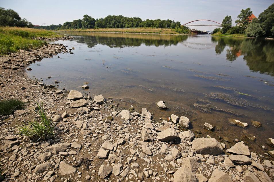 Niedriger Wasserstand der Elbe in Riesa.
