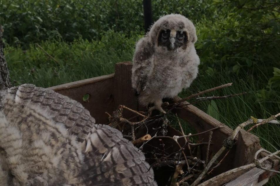 Hilflos saßen die vier Jungvögel zuerst nach dem Absturz im Garten. Familie Renner setzte sie mit Freunden zurück ins Geäst.