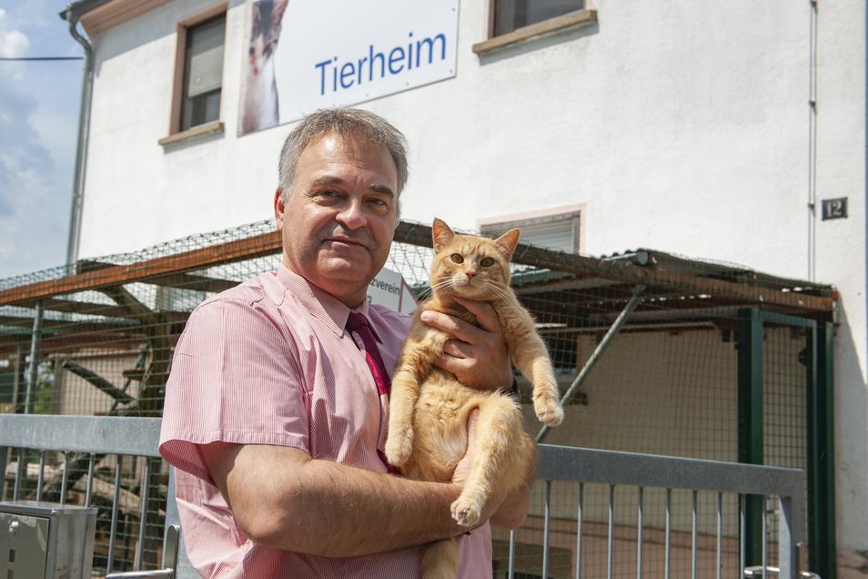 Matthias Kuri mit Kater Garfield auf dem Arm. Der Vorsitzende des Tierschutzvereines Radeberg erhält jetzt öfter besorgte Anrufe.