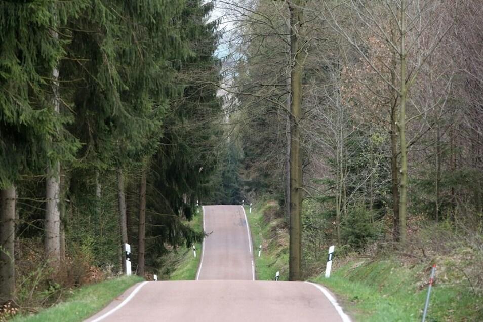 Nahe dieser Straße zwischen Dorfhain und Hartha im Tharandter Wald fand ein Jäger den erfrorenen Flüchtling.