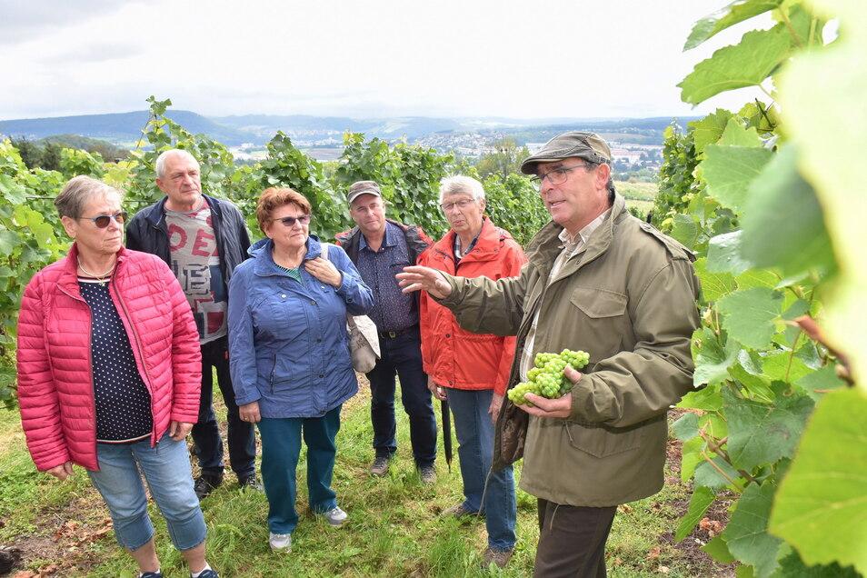 Besucher streiften durch den Weinberg von Gut Pesterwitz.