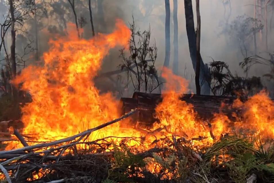 Am Samstag werden vom Wetteramt für die Region Temperaturen jenseits der 40-Grad-Grenze und starker Wind erwartet. Dadurch können die verheerenden Buschbrände noch einmal angefacht werden.